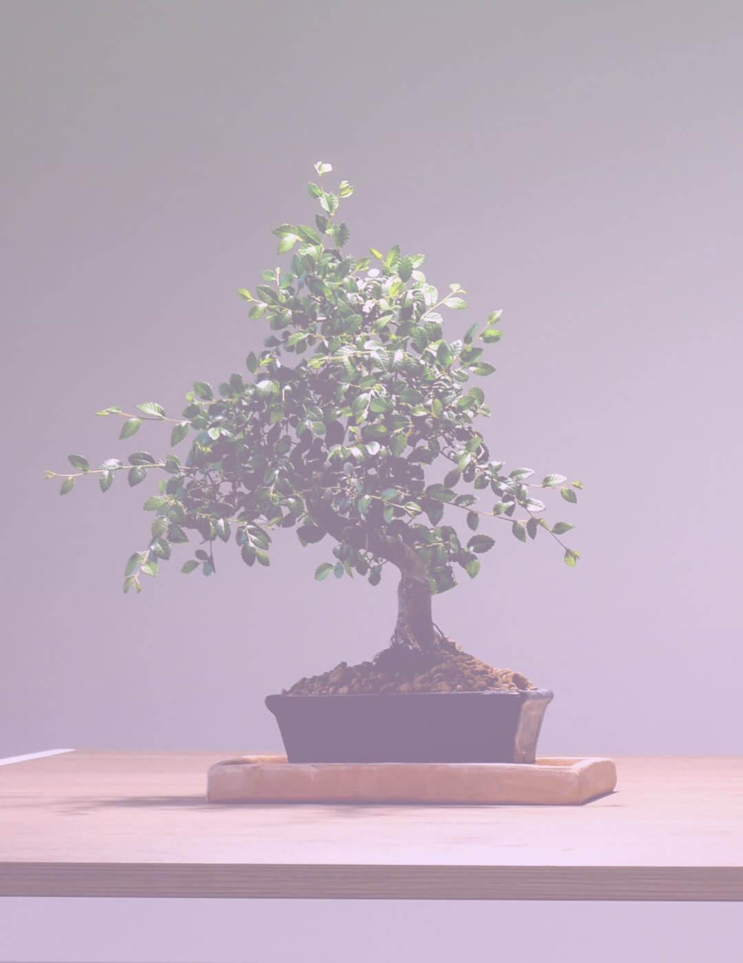 a bonsai tree as a meditation room decor