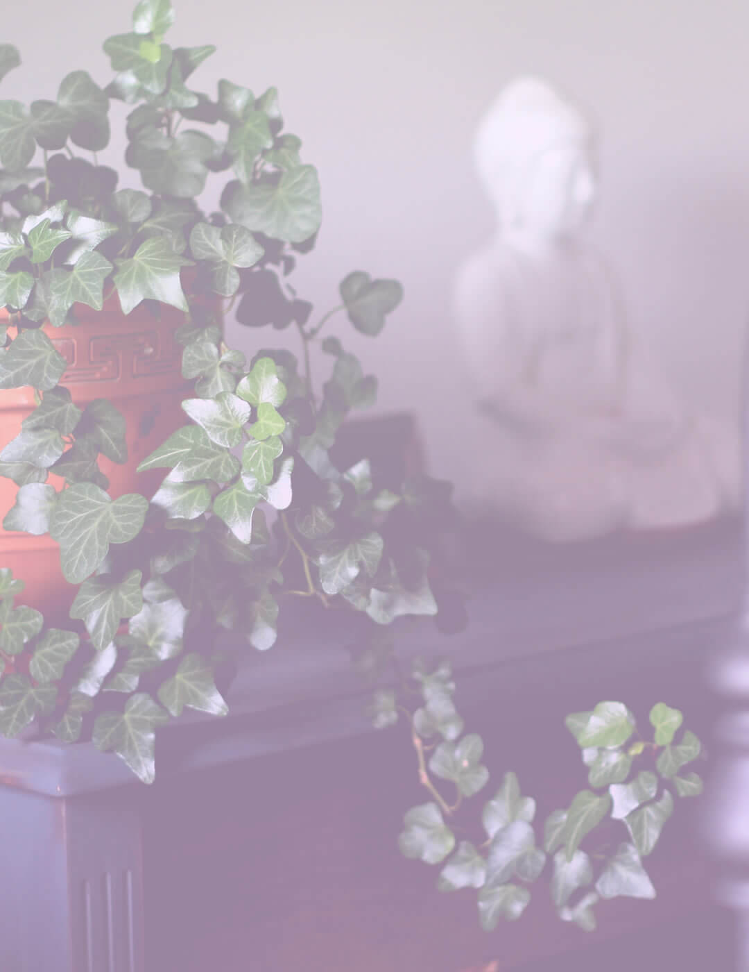 meditation room decorate with plants and Buddha statue