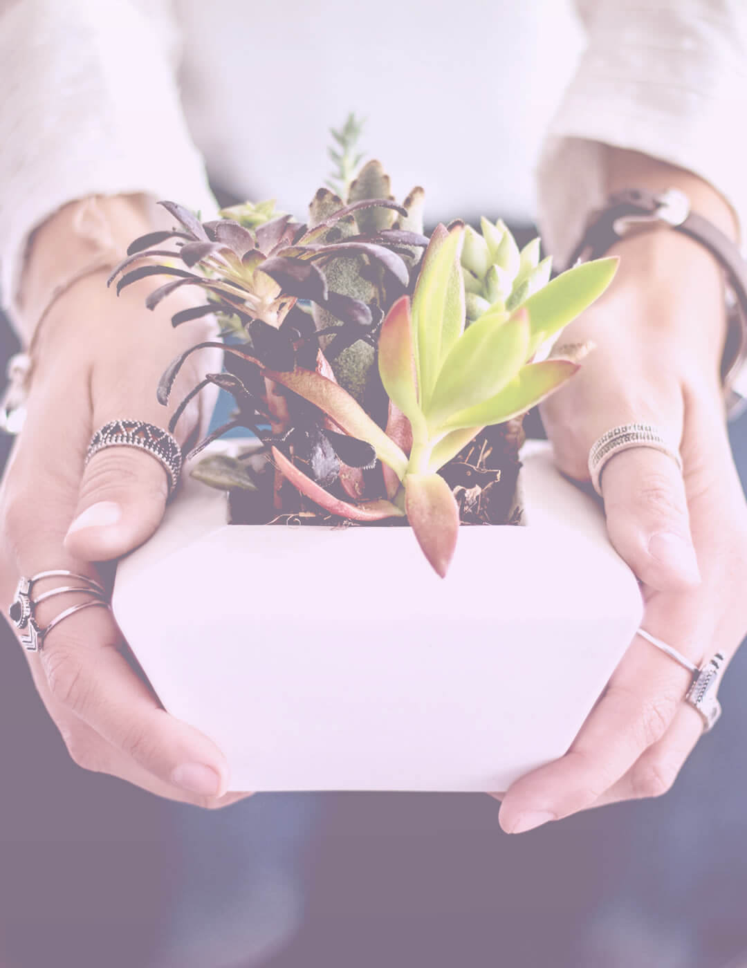 Caring for plants as one of the mindfulness activities