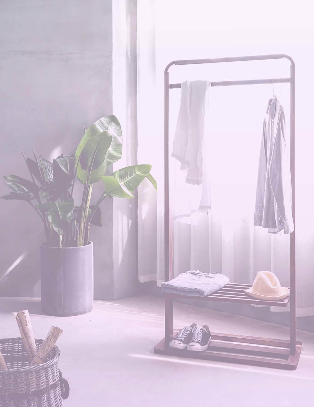 Green plant and a clothes rack for home organization