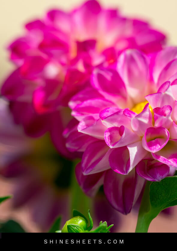 bright pink flowers as a reminder to enjoy life