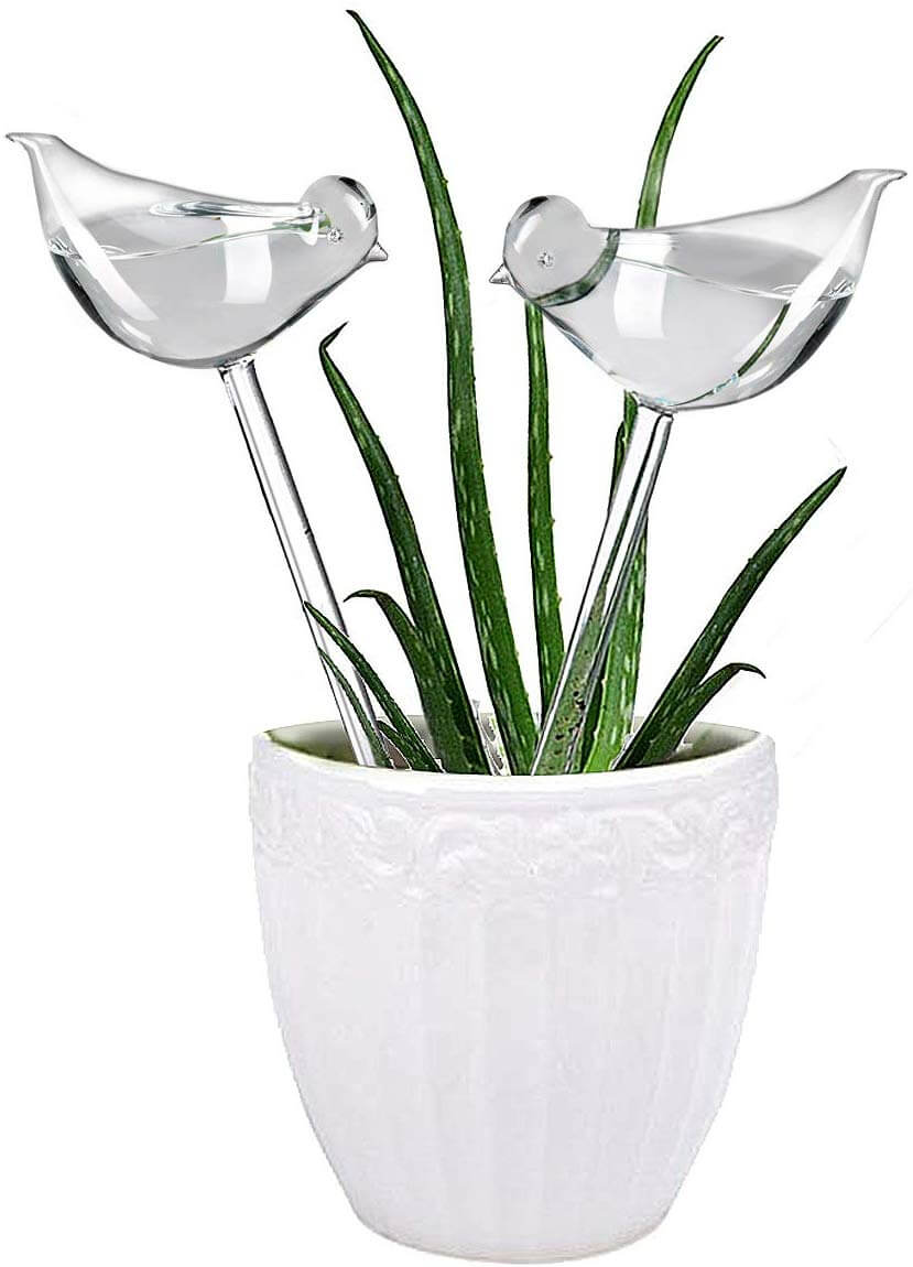 plant watering globes as a way to make life easier