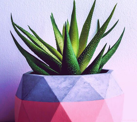 aloe vera plant in pt as one of the easiest cheap home decor ideas
