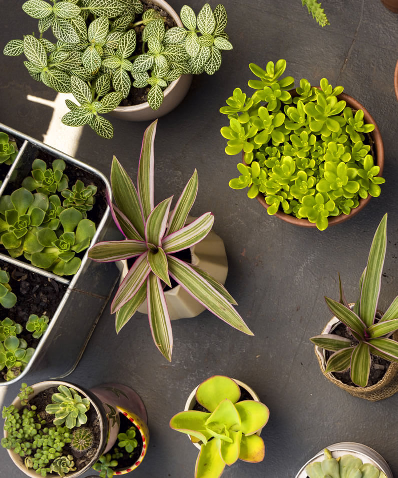 house plants in pots as home decor ideas