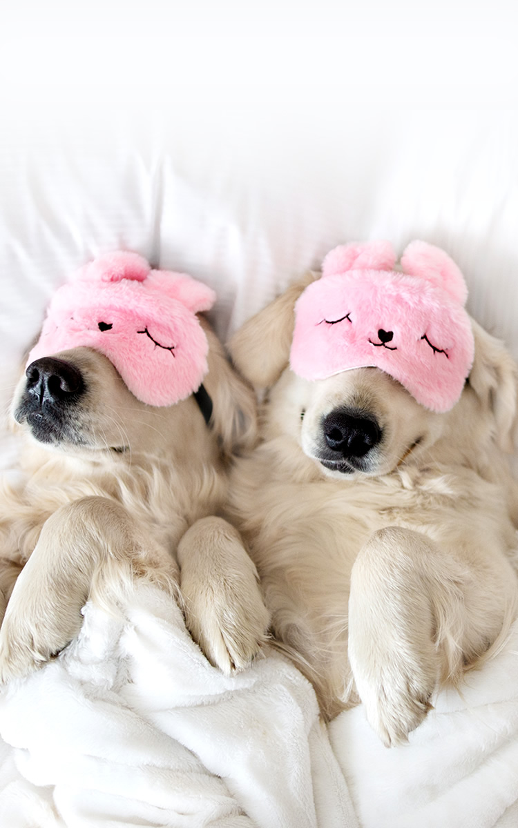 two dogs sleeping schedule