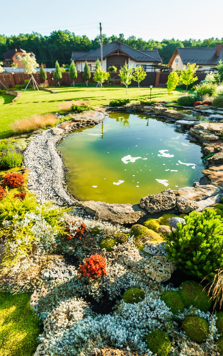 cosy garden with a pond