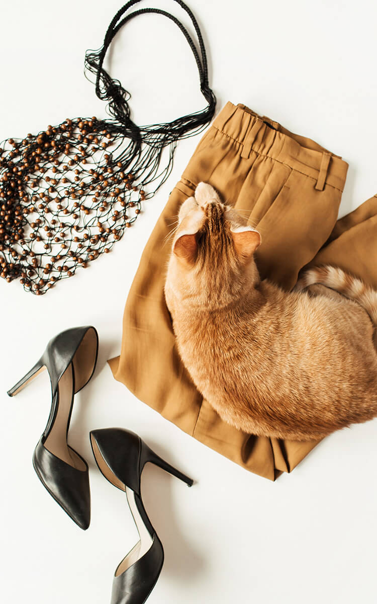 eco fashion clothes flatlay with a cat