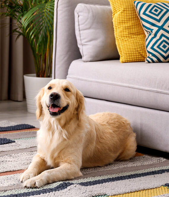 a nice dog as perfect home decor hack